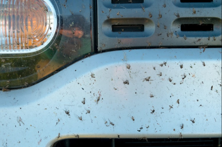 Remove Dead Bugs From Your Car