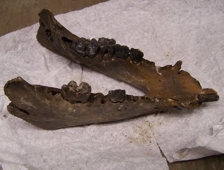 Random Jaw Bones